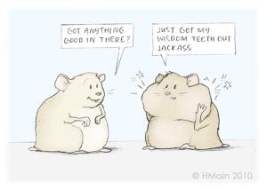 wisdom-teeth-hamster